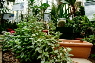 The Biology Greenhouse, McMaster University Campus
